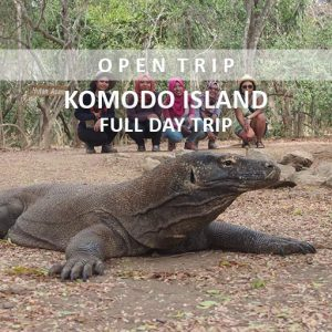 open trip sailing komodo full day alamindonesia